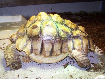 Tortoise Food List