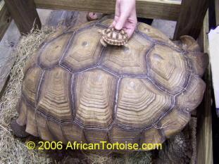 Turtle Rescue Ohio