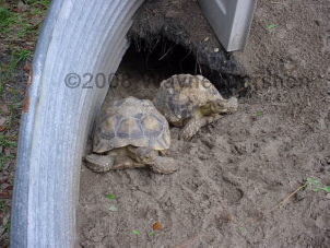 Long Island Turtle and Tortoise Rescue